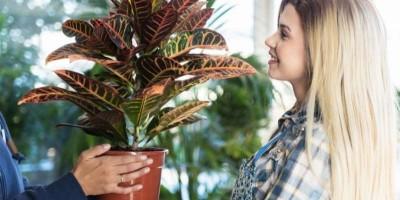 Comprar plantas para regalar... ¡todo un acierto!
