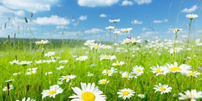 Consejos para enviar flores a domicilio en verano