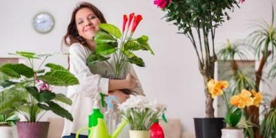 Plantas a domicilio a un click con Florclick