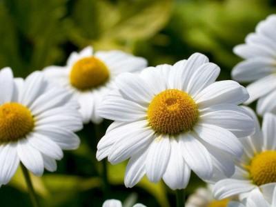 Calendario de flores