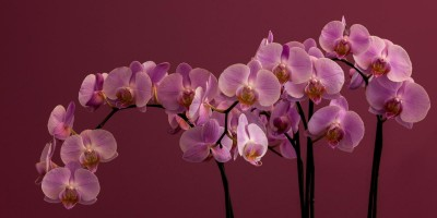 Comprar flores: su lenguaje secreto