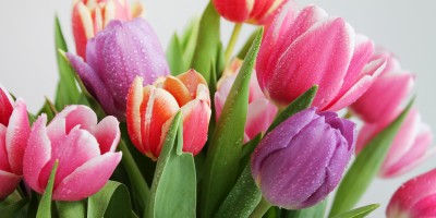 El significado de regalar tulipanes