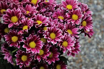 Flores a domicilio: envíalas, pero atendiendo a su significado