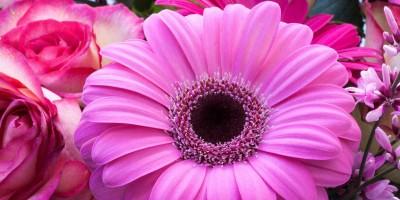 Las flores a domicilio más demandadas en España