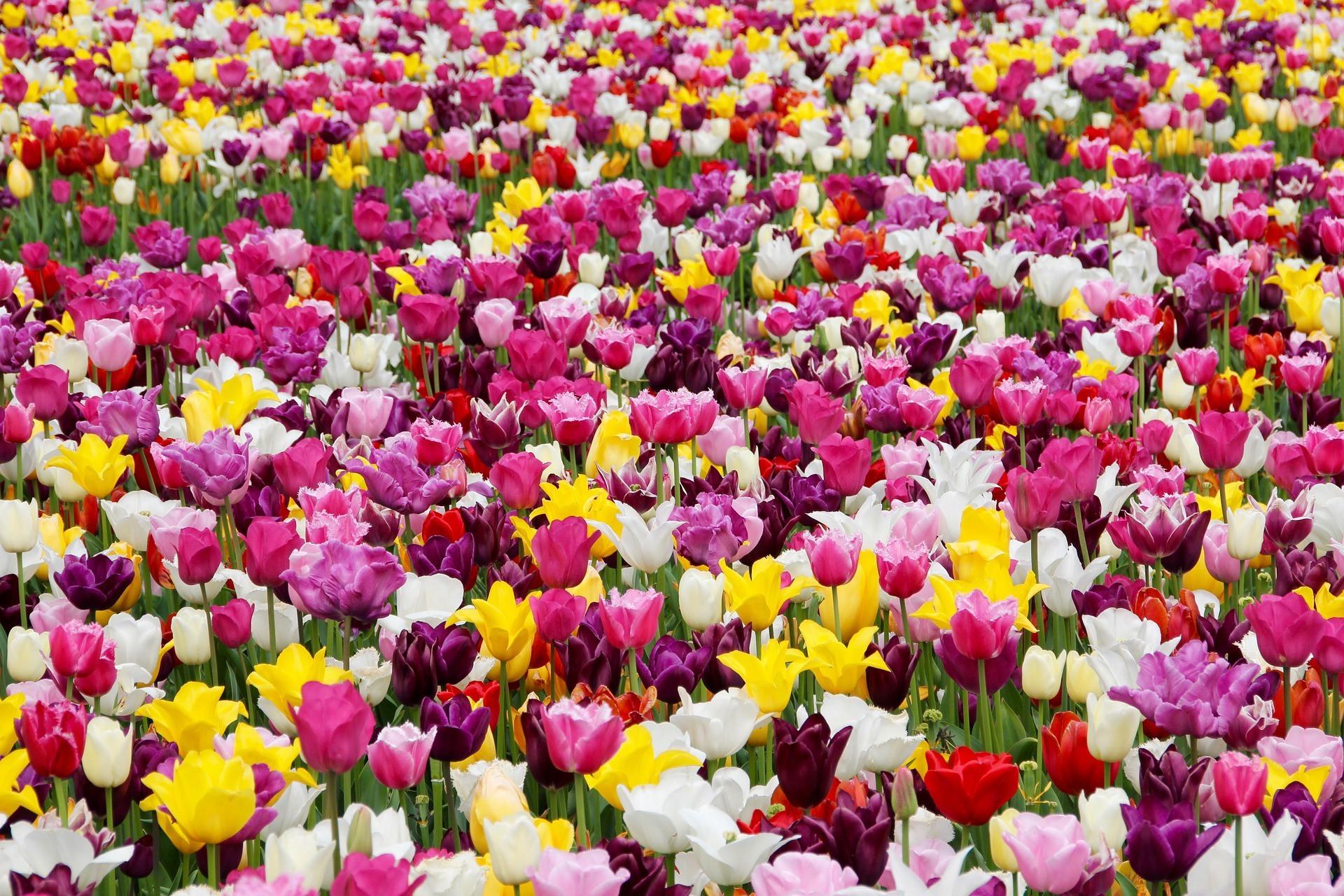 Las flores florecen en Mayo