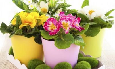 Llega la Primavera y con ella muchas plantas de temporada