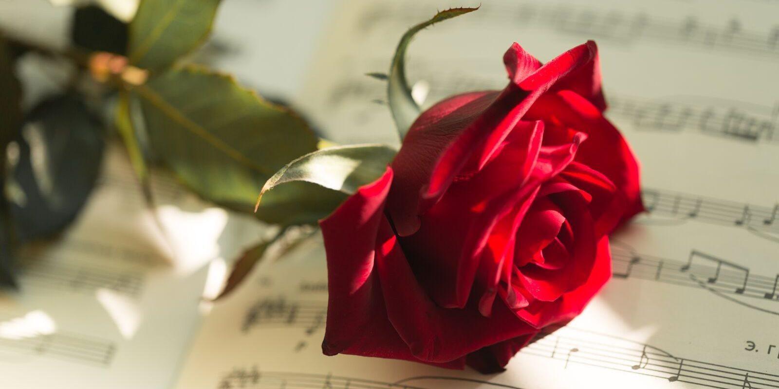 Los ramos de rosas rojas y sus leyendas