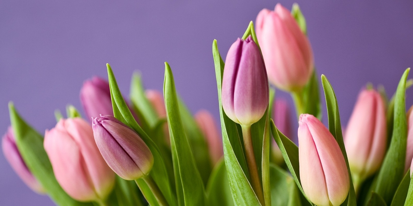 Motivos para regalar un ramo de flores el Día de la Mujer