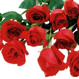 Docena Rosas Rojas Sueltas