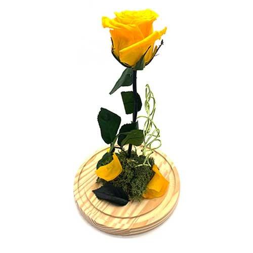 Rosa Bella y Bestia Amarilla