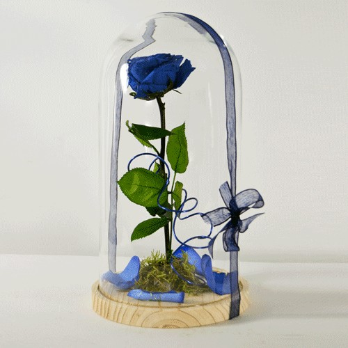 Rosa Bella y Bestia Azul