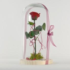 Rosa Bella y Bestia Roja