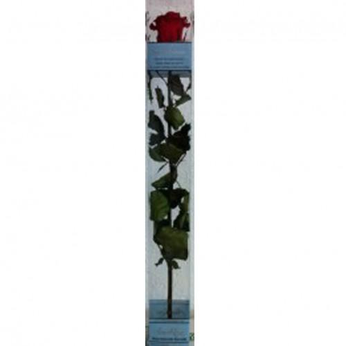 Rosa Eterna Roja Caja