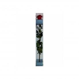 Rosa Eterna roja de 25cm.