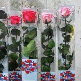 Rosa Eterna Rosa Caja